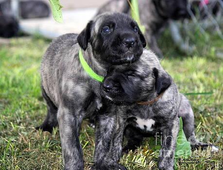 Puppy Love by Ann Butler