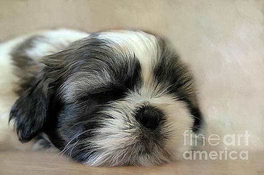 Puppy Love by Darren Fisher