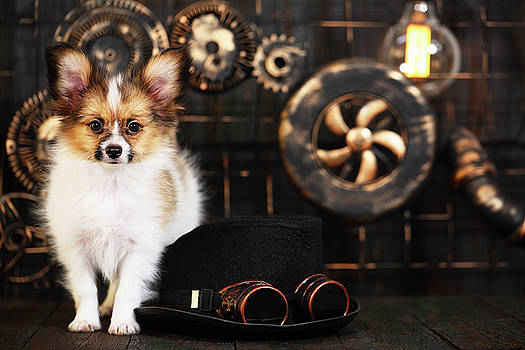 Puppy On Style Of Steampunk by Iuliia Malivanchuk
