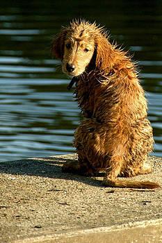 Bibi Rojas - Puppy on the pier