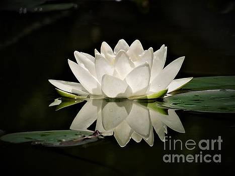 Pure and White by Chad and Stacey Hall