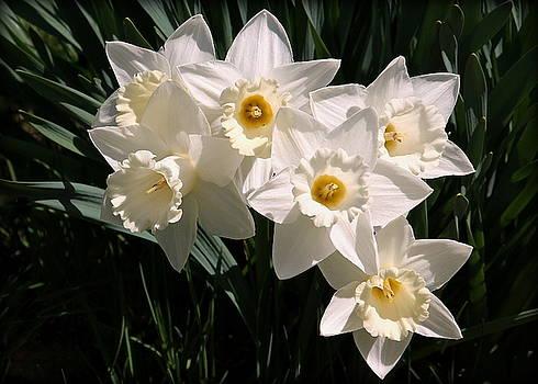 Rosanne Jordan - Pure Daffodils