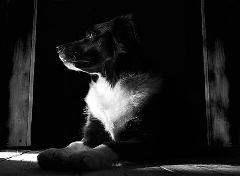 Pure Heart of a Collie by Art  Creations