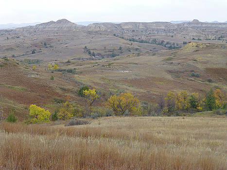 Pure Prairie Pleasure by Cris Fulton