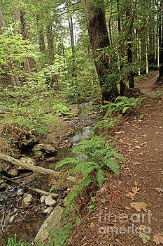 Purisima Creek Trail by Natural Focal Point Photography
