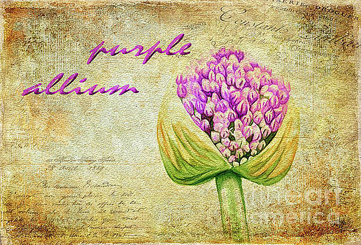 Lois Bryan - Purple Allium Bud
