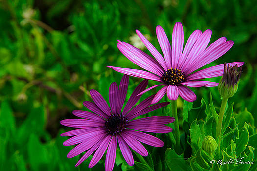 Purple and Green by Ron Thornton