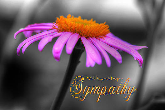 Purple and Orange Coneflower with Sympathy by Shelley Neff