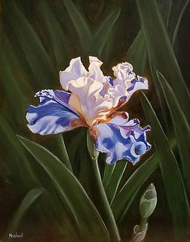 Purple and White Iris by Linda Merchant