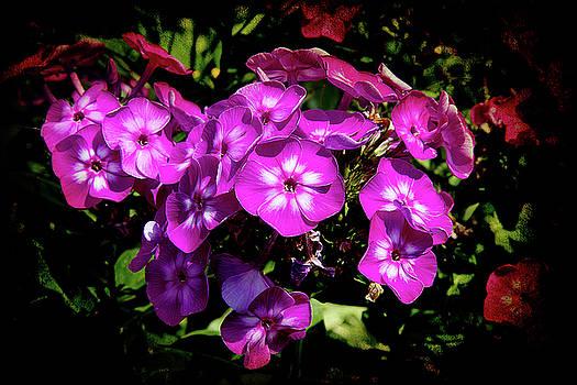 Purple and White by Milena Ilieva