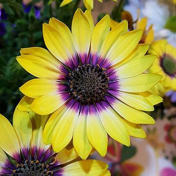 Purple And Yellow Daisy By Tammy by Tammy Finnegan