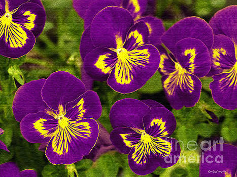 Purple And Yellow Pansy Delight by Candy Frangella