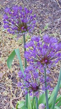 Purple Ball Flowers by Charlotte Gray