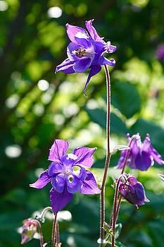 Purple Beauty  by Gabriella Weninger - David