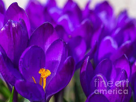 Ismo Raisanen - Purple Beauty