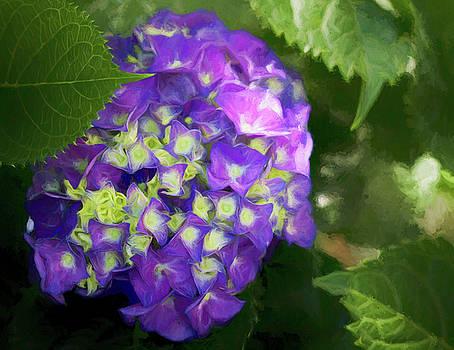 Purple Beauty  by Kathy Clark