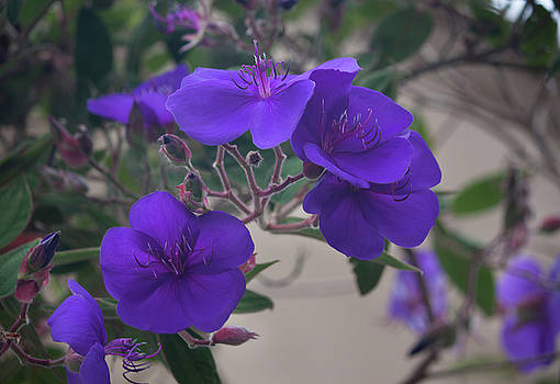 Purple Beauty by Suzanne Gaff
