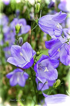 Joann Copeland-Paul - Purple Bell Flowers