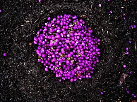 Purple Berries by Lizzie  Johnson