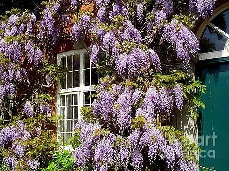 Purple bloom by Elena Ivanova