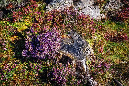 Jenny Rainbow - Purple Bloom of Stump