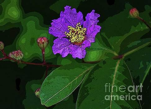 Purple Blossom by Craig Wood