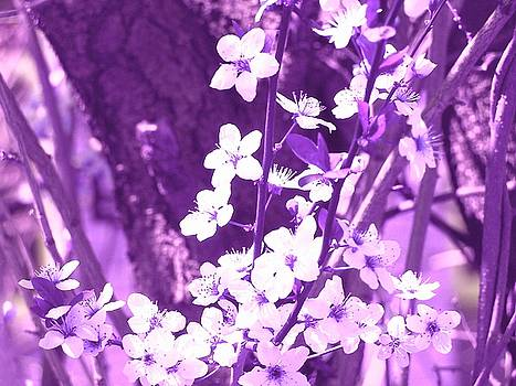 Purple Blossoms by Tommy Carhart