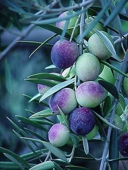 Purple Bunch by Heather Bethke