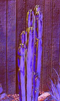 Purple Cactus by M Diane Bonaparte