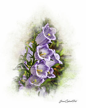 Purple Canterbury Bells by Joann Copeland-Paul