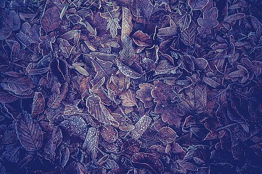 Jenny Rainbow - Purple Carpet of Frozen Leaves