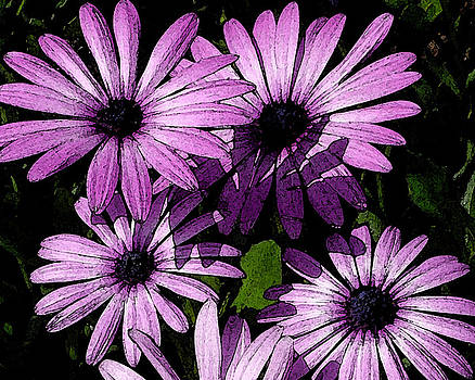 Purple Daisies Watercolor by D Winston