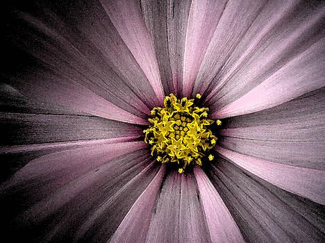 Purple Experiment by Kim Blumenstein