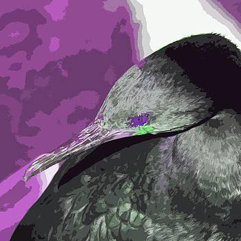 James Hill - Purple Eyed Shag