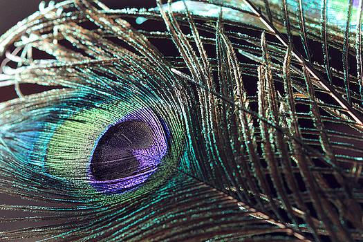 Angela Murdock - Purple Feather with Dark Background