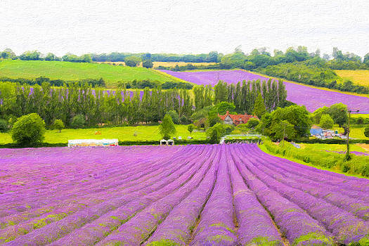 Purple Fields of Love by Zahra Majid