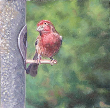 Purple Finch by Cynthia Vowell