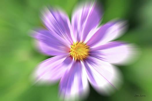 Purple Flower by Andrea Lawrence