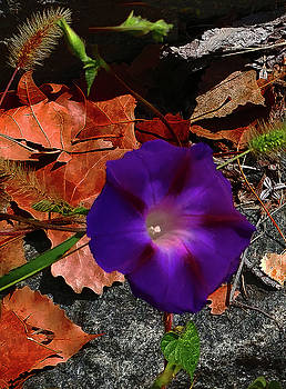 Purple Flower Autumn Leaves by Roger Bester