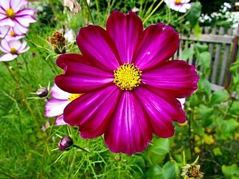 Purple Flower by Cesar  Vieira