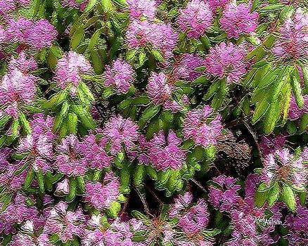 Purple Flower Delight #056 by Barbara Tristan