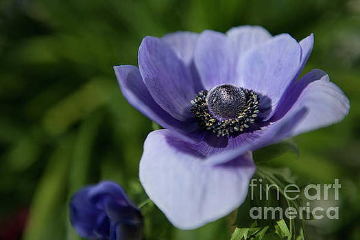 Purple Flower Power by Dale Powell