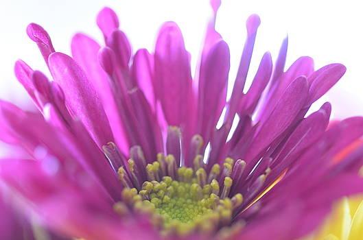 Purple Flower by Stella Marin