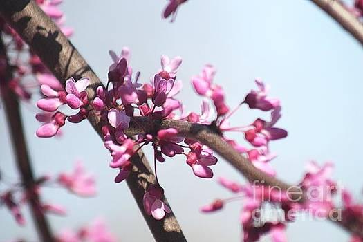 Monica Whaley - Purple Flowers 2
