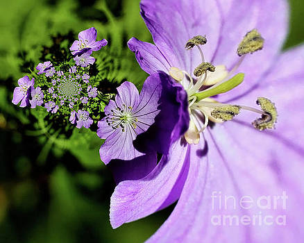 Purple Flowers Abstract by Smilin Eyes  Treasures