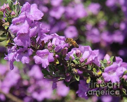 Purple Flowers And Bee by Anthony Jones