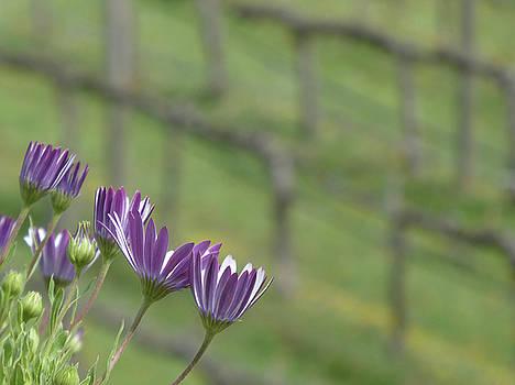Purple Flowers and Grape Vines by Marcia Socolik
