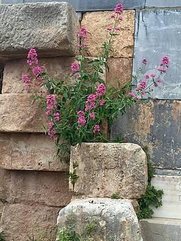 Purple Flowers in Ruins by Leslie Brashear