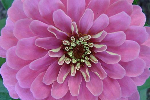 Purple Flowers by Mary Halpin