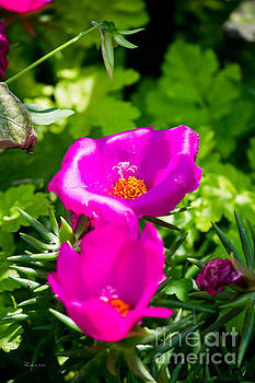 Purple Flowers by Ms Judi